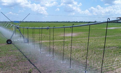 """Prina apuesta por la producción de semillas del 'grano de oro' bajo riego con pivotes Valley """"EL DEBER"""""""